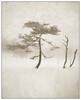 Winter trees II (Georg Engh) Tags: winter vinter infrared textured infrarød landscapesshotinportraitformat topstad