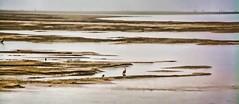 ISOLATION (Irene2727) Tags: bird nature water fauna oregon landscape bay waterscape coastaloregon netartsbay spitofland