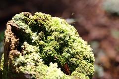 (tsubasa8336) Tags: life light shadow tree nature
