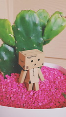 (kibblesthepig) Tags: toy box danbo