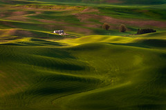 Steptoe Butte, Washington (EdBob) Tags: steptoe steptoebutte steptoebuttestatepark palouse agriculture agricultural silos farmland farm farming easternwashington washington washingtonstate landscape statepark sunlight textures rural country countryside colfax beautiful scenic vista view viewpoint travel destination tourism sunset dusk nopeople edmundlowephotography edmundlowe allmyphotographsare©copyrightedandallrightsreservednoneofthesephotosmaybereproducedandorusedinanyformofpublicationprintortheinternetwithoutmywrittenpermission wwwedmundlowephotocom