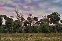 Riverbend - Highway Men Scene (Roberto_Aloi) Tags: nature landscape riverbendpark nothdr