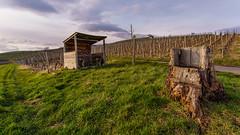 An unusual chair (Che Camera) Tags: nature landscape vineyard natur landschaft kaiserstuhl weinberg vogtsburg oberrotweil sonyalpha7 ef1740f40 teamsony ilce7