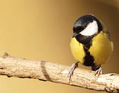 bird (Aleoko) Tags: challengegamewinner fotocompetitionbronze