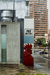 El Gallo (Chechogrfico) Tags: graffiti gallo colombia bogot rooster rainycity lecoq chechoduque bogotlluviosa