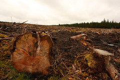 Barren landscape after tree harvesting (Steven McD) Tags: wood ireland pine forest canon log harvest explore soil stm 1018 northern boarder debri 10mm killeter