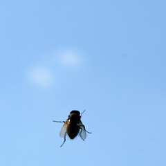 fly on window (joaobambu) Tags: