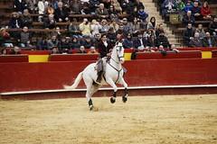 _DSC1145 (Copy) (chris30300) Tags: toros cartagena corrida ventura valence fallas vicens rejon