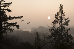 Yet Another Misty Sunrise (with geese) (Michel Couprie) Tags: trees light sun mist france tree bird birds misty seine backlight composition sunrise canon river landscape eos goose michel contrejour yvelines vexin larocheguyon couprie ef100mmf28lismacro