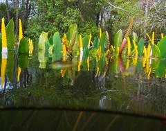 Water Plants Delta 1 (leethompson164) Tags: plants water alabama delta bayminettecreek