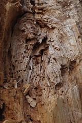 Wolfshof (Harald Reichmann) Tags: spur holz wald niedersterreich waldviertel metamorphose lebensraum verwitterung totholz umwandlung wolfshof gansbachgraben