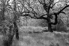 FK0A0192 (Grinched Photography) Tags: blackandwhite bw springlake