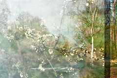 New Life I (AirSonka) Tags: green film nature analog 35mm spring pentax blossom multipleexposure analogue pentaxmz7 tripleexposure pelcula filmphotography pellicule kodakgold200 airsonka soniakaniss