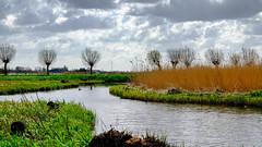 Waterland - willow trees (Boudewijn Vermeulen) Tags: blue green water grass clouds landscape bomen groen blauw skies meadows wolken gras landschap waterland luchten sloten ditches publ