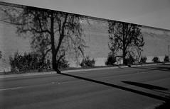 Suggestion of Trees (bingley0522) Tags: sunnyvale suburbia diafine suburbs bernardo soundwall sundaymorningwalk carlzeisstessar40mmf35 epsonv500scanner aristapremium400 rollei35germany
