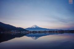 Mt. Fuji (happykiddo) Tags: lake japan sunrise nikon fuji mt voigtlander  kawaguchi d800    20mmf35 slii