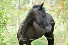 (DJguineo) Tags: d5200 nikon digital caballo tibacuy 50mm contraste highcontrast