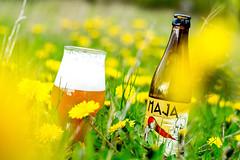 DSC_6754p (vermut22) Tags: beer bottle beers brewery birra piwo biere beerme beertime browar butelka