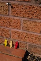 Jelly babies (clogette) Tags: england bristol unitedkingdom gb jellybabies totterdown