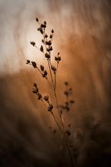 a shadowland (paulf*) Tags: shadow plant soft mood bokeh dreamy serene
