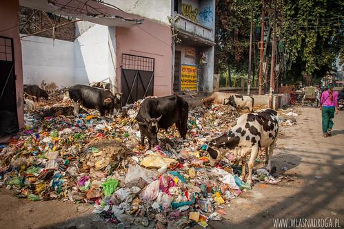 Śmieci w Waranasi