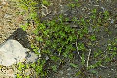 atardeciendo (ebsigma) Tags: naturaleza rio river atardecer flor amarillo vida araa curva largaexposicion dilar