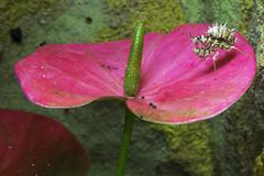 Exotische Wunder am quator (Helmut44) Tags: animal mantis blossom afrika blte tier gottesanbeterin exoten tierwelt tierportrt