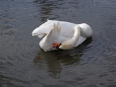1227-21L (Lozarithm) Tags: slimbridge wwt gloucs swans k50 smcpda1770mmf4alifsdm pentax zoom 1770