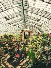 Un jour de pluie aux Serres d' Auteuil (cicitron) Tags: paris green leaf olympus botanique trip35 serre auteuil