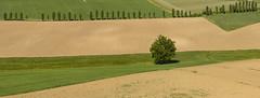 Presentatarm  -  Presented arm (Dei's Light) Tags: italy tree primavera field country meadow row campagna piemonte campo albero prato piedmont fila ploughing monferrato aratura