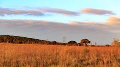 Addo Field Landscape (charissadescande) Tags: africa road park travel wild sky elephant green tourism nature grass animal landscape southafrica addo outdoors outdoor african background wildlife south reserve safari dirt national naturereserve environment easterncape kruger gamereserve addoelephantnationalpark zaf