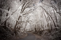 Copps Chapel Road Infrared (Notley) Tags: trees rural ir country may missouri infrared gravelroad 2016 10thavenue ruralmissouri notley wooldridgemissouri ruralphotography lifepixel infraredconversion notleyhawkins missouriphotography httpwwwnotleyhawkinscom notleyhawkinsphotography moniteaucountymissouri coppschapelroad
