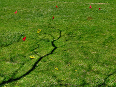 primavera... (bruce grant) Tags: sombras erva bandeirinhas