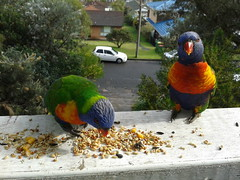 Our Visitors