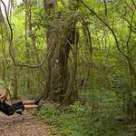Portrait of a Young Tarzan at Acadiana Park, Louisiana thumbnail