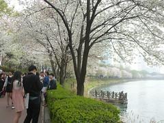 C16-Seoul-Parc Seokcho(13) (jbeaulieu) Tags: seoul coree parc seokcho
