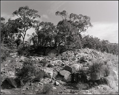 'Rocky' (wallygawr) Tags: film landscape tmax analogue bronicags1 12mins adonal150 100mmf351 bellsrapidslookout