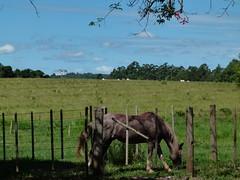 (IgorCamacho) Tags: sky horse nature field landscape natureza paisagem cu cielo campo cavalo