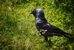 Bird No. 5668 (Knipser31405) Tags: sommer vgel 2015 trifels