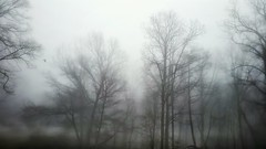 An unexpected visitor. (kristie1elise) Tags: trees bird nature fog rural landscape moody gloomy tennessee mysterious