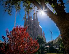 Sagrada Familia (tony.wish) Tags: barcelona park city building tree church architecture spain nikon europe sigma wideangle sagradafamilia hdr d5300