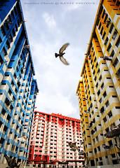 Rochor Centre (Rev'it) Tags: street heritage alt superior landmark rgb iconic nhb rochorcentre nationalheritageboard singaporeheritagefest