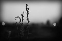 Muda soledad (Breiner Guarn) Tags: naturaleza planta luces bn soledad