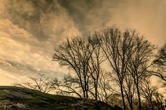 Central Park - Trees, Rocks and Sky (Eric Gross) Tags: light sky newyork centralpark manhattan