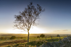 Beacon Hill Tree (John__Hull) Tags: uk trees sunset england sun nature stone wall fence landscapes countryside nikon leicestershire heather hill breath sigma filter nd vista fields taking 1020mm grad setting beacon woodhouse charnwood d3200