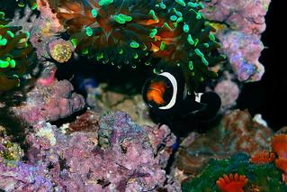 Nemo's Nano Reef, EXPLORED Jan 23rd 2016