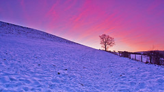 Single tree sunrise. (paul downing) Tags: winter snow sunrise nikon 12 filters hitech singletree greatayton northyorkshire roseberrytopping northyorkshiremoors gnd pd1001 pauldowning d7200 pauldowningphotography