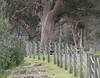 Happy Fenced Friday (Home Land & Sea) Tags: winter newzealand fence nz waikato taupo pointshoot sonycybershot hff fencedfriday homelandsea dschx100v