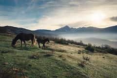 Lago di Campotosto, wild horses (jimmomo) Tags: horses mountains sunrise haze italia wildlife montagna cavalli animali abruzzo campotosto