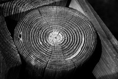 More Than 20, Less Than 25 (Explored 2/6/16) (J Swanstrom (Thanks for all the comments and favs)) Tags: wood bw detail tree texture contrast nikon post deck rings age trunk weathered d80 jswanstromphotography